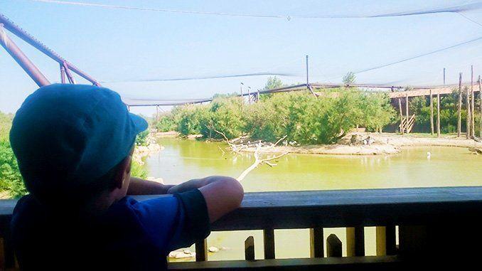 Vista general del gran aviario de la reserva de Sigean.