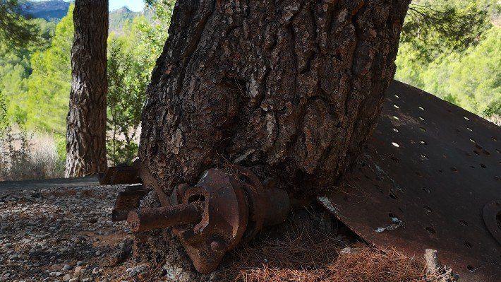 Prat de Compte arbre